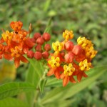 oranges yellow flowers in Tropical Rainforest , 8 Pictures Of Tropical Rainforest Pictures Of Plants In Plants Category