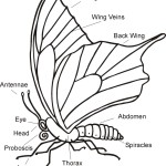 parts of a butterfly parts , 5 Pictures Of Monarch Butterfly Body Parts In Butterfly Category