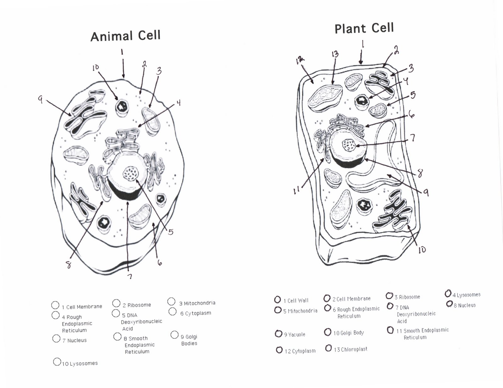 Worksheets Animal And Plant Cells Worksheet plant and animal cells diagram quiz 6 cell quiz