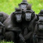 primates in tropical rainforest , 7 Pictures Of Tropical Rainforest Primates In Primates Category