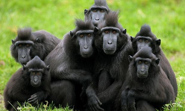 Primates , 7 Pictures Of Tropical Rainforest Primates : Primates In Tropical Rainforest