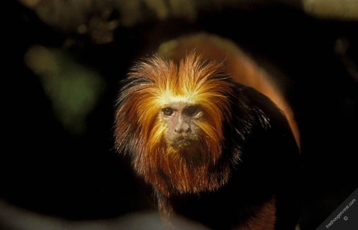 Primates , 7 Pictures Of Tropical Rainforest Primates : Primates Monkey Rain Forest Tropical