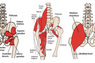 psoas muscle back pain in Plants