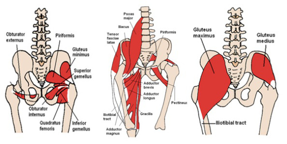 Muscles , 7 Psoas Muscle Back Pain : Psoas Muscle Back Pain