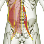 psoas muscle lower back pain , 7 Psoas Muscle Back Pain In Muscles Category
