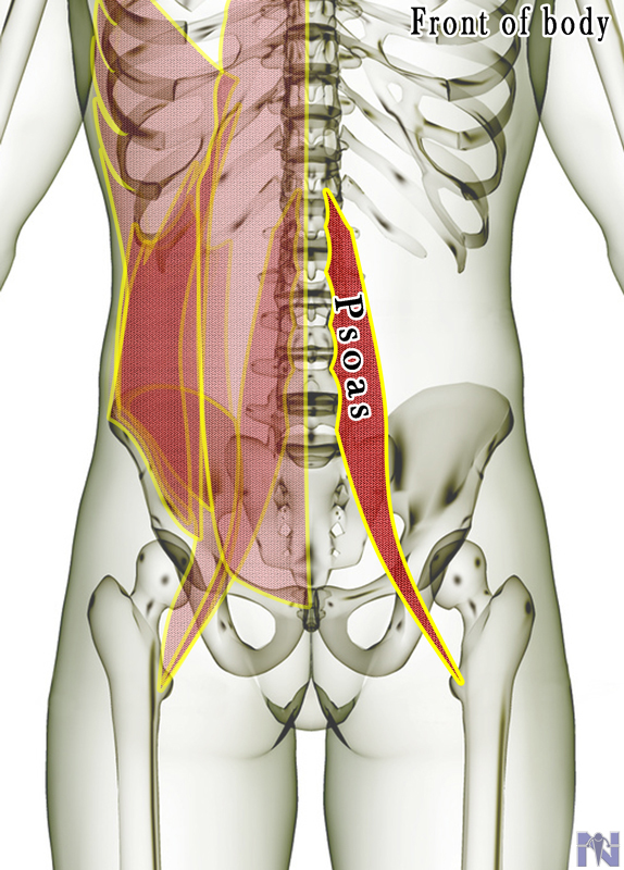 Muscles , 7 Psoas Muscle Back Pain : Psoas Muscle Lower Back Pain