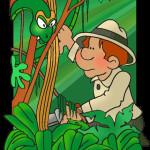 rainforest clip art , 7 Rainforest Animals Clipart In Animal Category