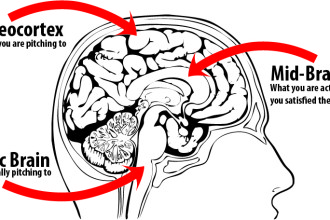 reptilian part of the brain pic 1 in Organ