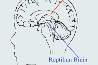 Reptilian Part Of The Brain Pic 3 , 4 Reptilian Part Of The Brain Pictures In Brain Category