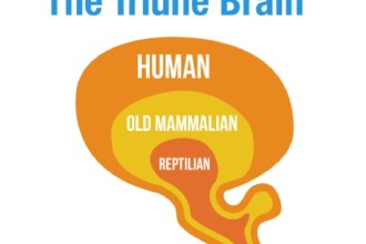 Reptilian Part Of The Brain Pic 4 , 4 Reptilian Part Of The Brain Pictures In Brain Category