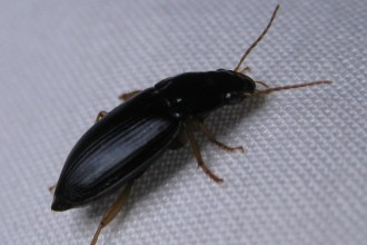 small beetles in Scientific data