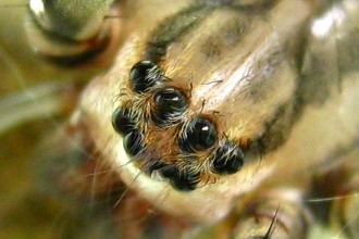 spider eyes pic 1 in Butterfly