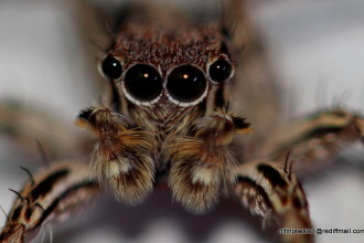 Spider Eyes Pic 3 , 9 Spider Eyes Pistures In Spider Category