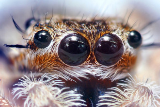 Spider Eyes Pic 5 , 9 Spider Eyes Pistures In Spider Category