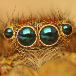 spider eyes pic 8 , 9 Spider Eyes Pistures In Spider Category