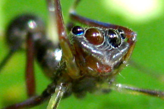 Spider Eyes Pic 9 , 9 Spider Eyes Pistures In Spider Category