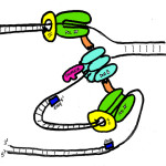 teaching dna replication to kids , 5 Teaching Dna Replication In Cell Category