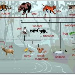 temperate rainforest food chain , 7 Diagrams Of Rainforest Animals Food Chain In Animal Category
