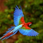 the tropical rainforest facts , 6 Tropical Rainforest Animal Facts In Animal Category