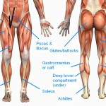 tight muscles back of thighs , 7 Pictures Muscles Back Of Thigh In Muscles Category