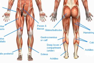 tight muscles back of thighs in Scientific data