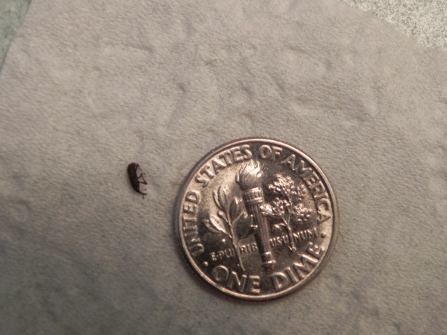 Tiny Bugs In Bathroom Biological Science Picture