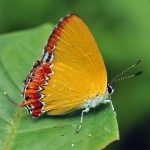 tropical rainforest butterfly , 6 Kind Of Animals In The Tropical Rainforest In Animal Category