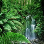 tropical rainforest climate , 7 Tropical Rainforest Climate Photos In Forest Category