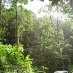 tropical rainforest climate conditions , 7 Tropical Rainforest Climate Photos In Forest Category