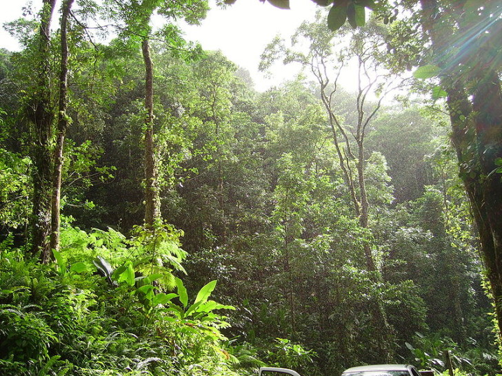 Forest , 7 Tropical Rainforest Climate Photos : Tropical Rainforest Climate Conditions