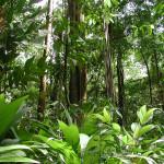 tropical rainforest climate facts , 7 Tropical Rainforest Climate Photos In Forest Category