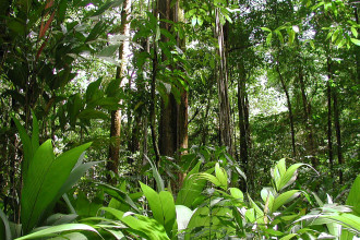 Tropical Rainforest Climate Facts , 7 Tropical Rainforest Climate Photos In Forest Category