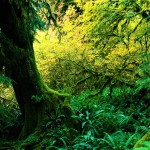 tropical rainforest climate graph , 7 Tropical Rainforest Climate Photos In Forest Category