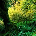 tropical rainforest climate graph , 7 Tropical Rainforest Climate Photos In Forest Category