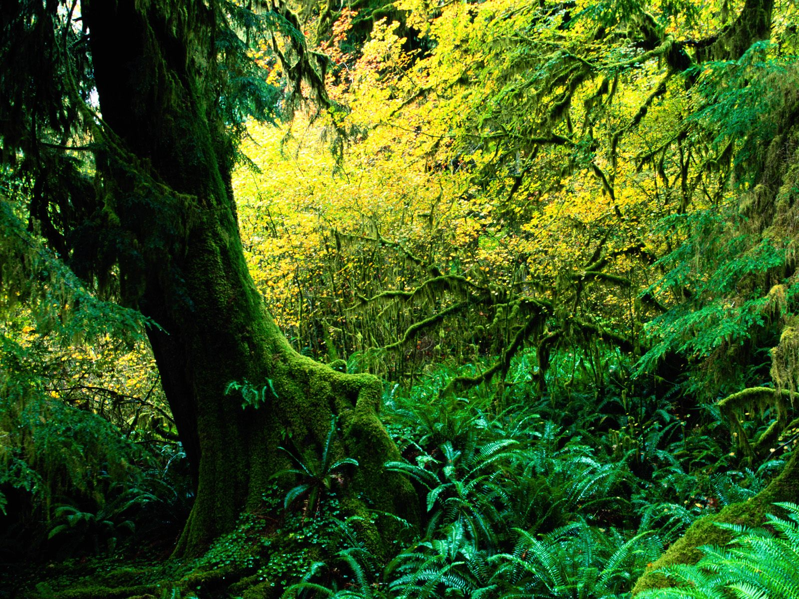 Tropical Rainforest Climate Graph : 7 Tropical Rainforest Climate ...