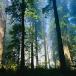 tropical rainforest climate vegetation , 7 Tropical Rainforest Climate Photos In Forest Category