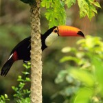 tropical rainforest facts , 6 Tropical Rainforest Animal Facts In Animal Category