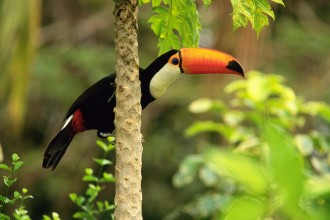 tropical rainforest facts in Birds