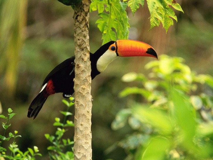 Animal , 6 Tropical Rainforest Animal Facts : Tropical Rainforest Facts