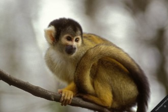 tropical rainforest monkeys primates in Cell