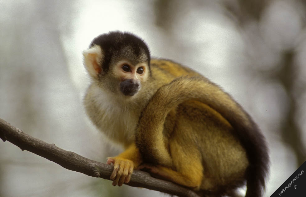 tropical rainforest monkeys primates