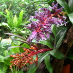 tropical rainforest plant , 8 Pictures Of Tropical Rainforest Pictures Of Plants In Plants Category