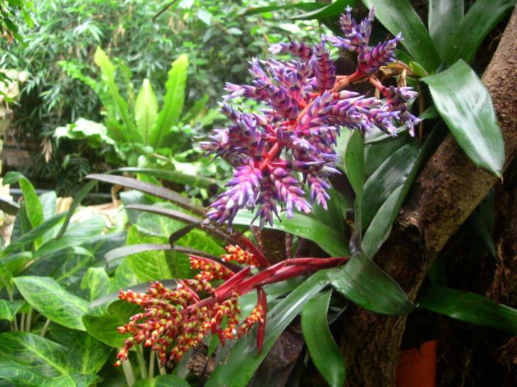 Plants , 8 Pictures Of Tropical Rainforest Pictures Of Plants : Tropical Rainforest Plant