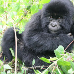 tropical rainforest primates , 6 Kind Of Animals In The Tropical Rainforest In Animal Category