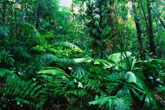 tropical rainforest vegetation in Birds
