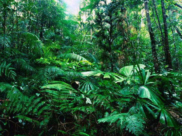 Forest , 7 Tropical Rainforest Climate Photos : Tropical Rainforest Vegetation