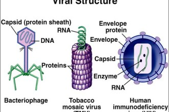Viral Sturucture , 5 Viruses Dna Structure In Microbes Category