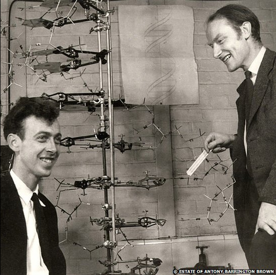 Cell , 5 Watson And Crick Dna Structure : Watson And Francis Crick Structure Of Dna Source