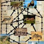 African Grassland Food Web , 6 African Savanna Food Webs In Ecosystem Category