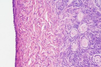 Anatomy Histology Picture , 6 Photos Of Anatomy Histology In Cell Category